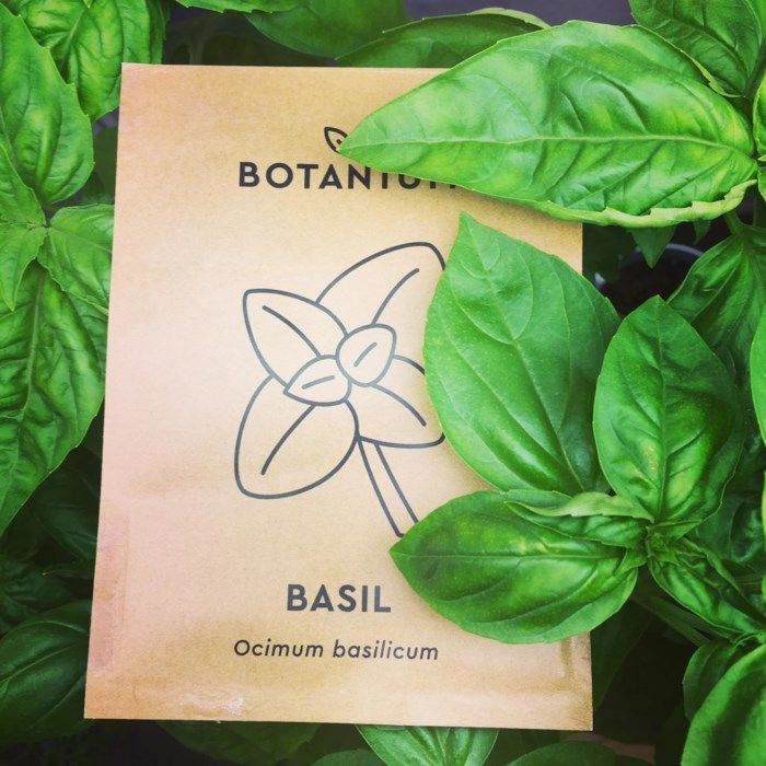 Botanium Fröer till Basilika Sweet Green