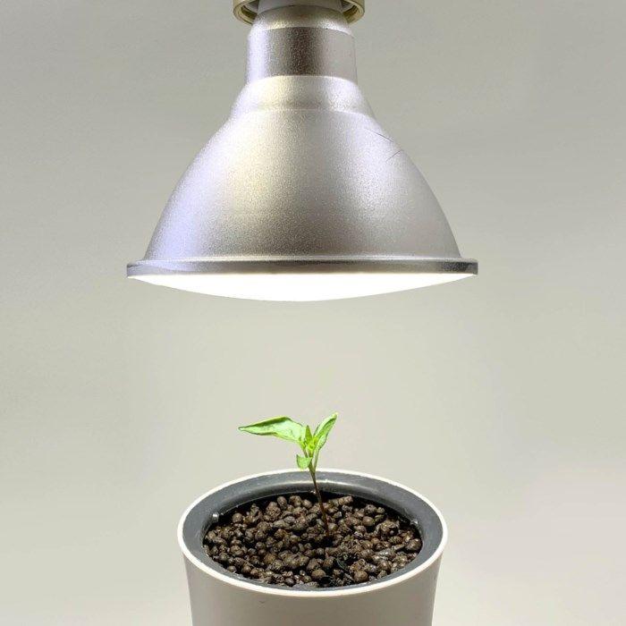 Botanium Växtlampa E27 15 W
